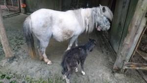 子馬が産まれました!